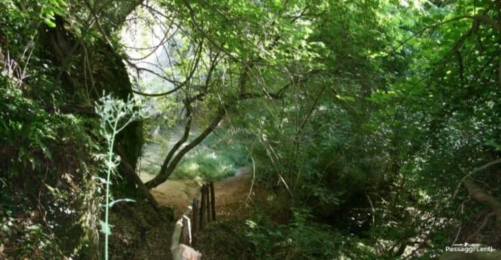 Il sentiero che porta all'eremo di Poggio Conte