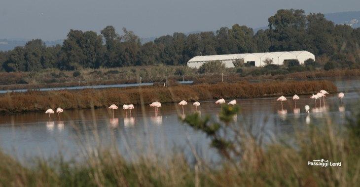 Fenicotteri rosa alla laguna di Orbetello