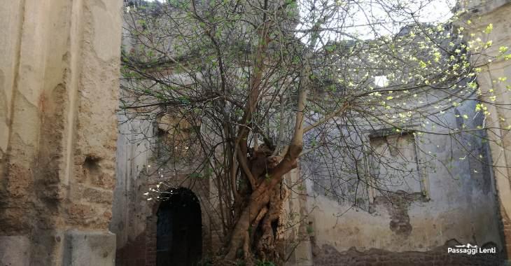 """L'albero di fico all'interno dei resti del Convento reso celebre da una scena de """"Il marchese del grillo"""""""