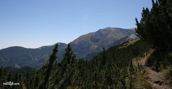 I pini mughi ungo il percorso di trekking verso l'Anfiteatro delle Murelle