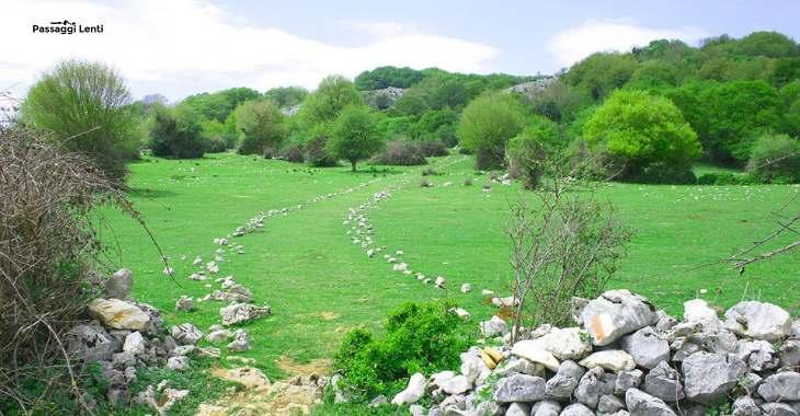 Il percorso che dal Pratone conduce al Monte Gennaro