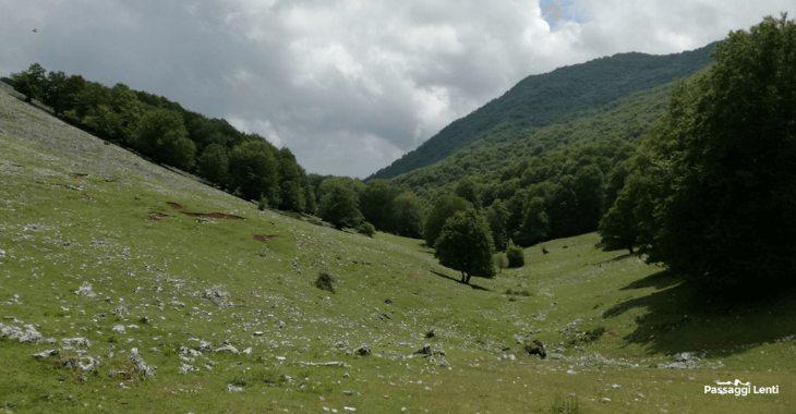 La sella erbosa posta tra il monteCapreo e la Semprevisa