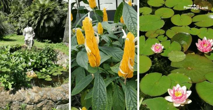 Giardino botanico Roma: le piante