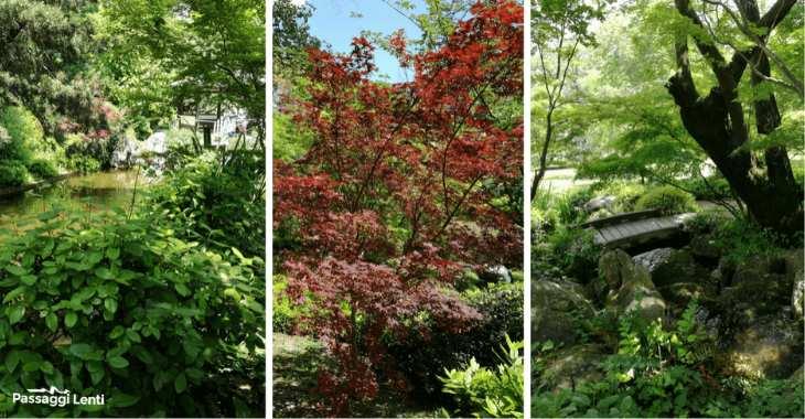 Orto botanico Roma: il giardino giapponese