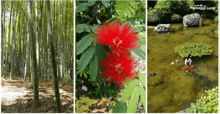 Orto botanico Roma: cosa vedere