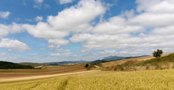 Cammino Francese. I campi della Regione Rioja