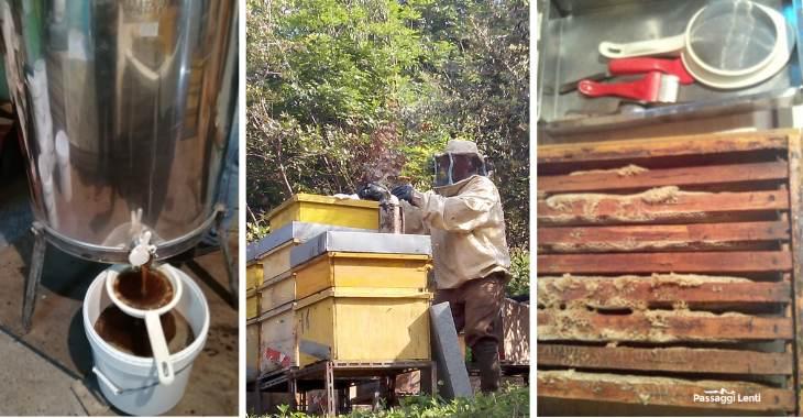 Perché le api stanno morendo