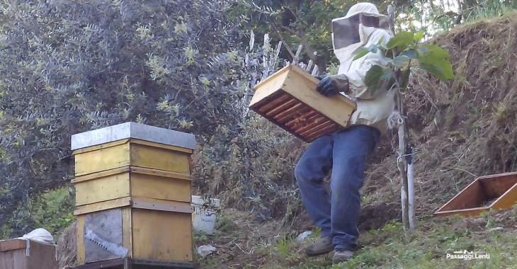 Perché le api si stanno estinguendo?