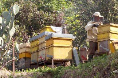 Perché le api stanno scomparendo?