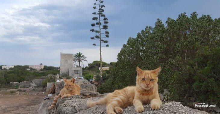 Isole Egadi: gatti a Favignana