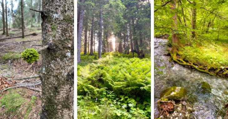 Benefici del Bagno di Foresta