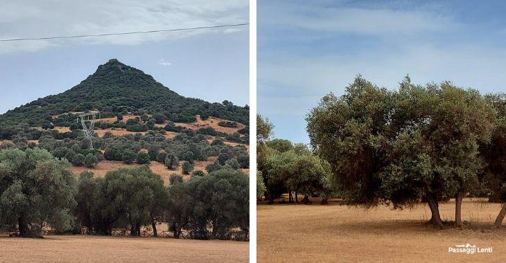 Alberi secolari in Sardegna